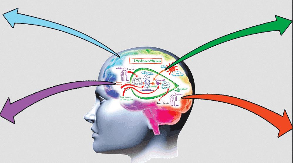 Cara Meningkatkan Daya Ingat Anda Dengan Mudah